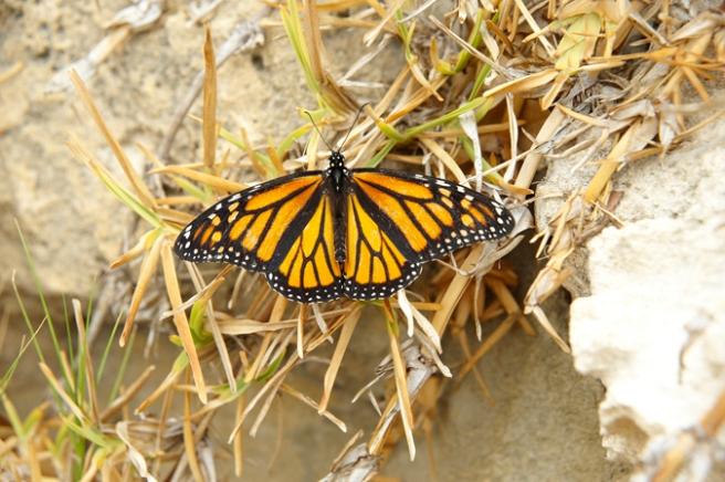 Butterfly Release. Kelly Kent - mypapercraftjourney.com.
